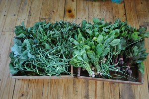 Produce from our acre of vegetable gardens.