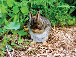 A widdle bunny. Being cute. Which happens a lot here. Photo by Stephanie.