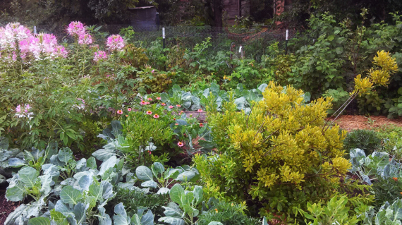 Unseasonably lovely garden refreshed by rain. Photo by Cob.