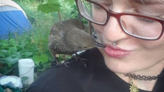 A human-raised starling communes with Liz's daughter, Talia. Photo by Andy S.