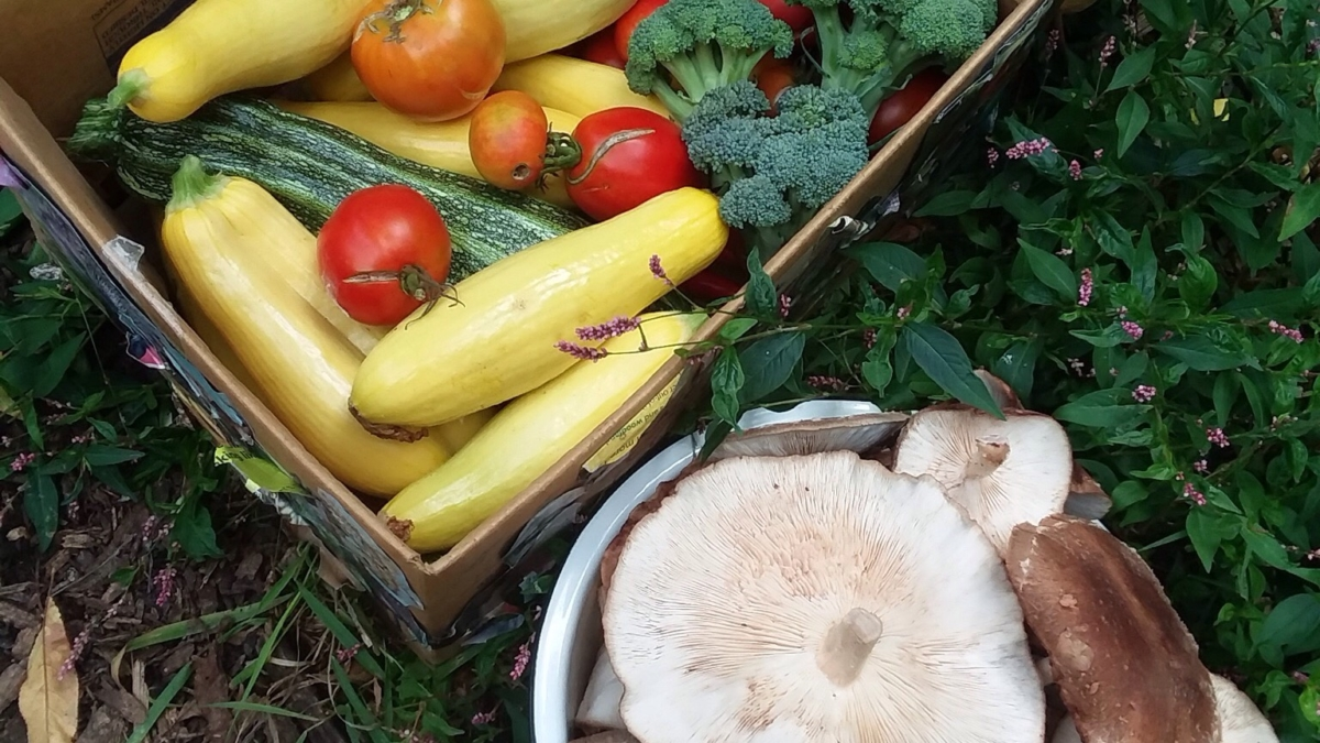 Produce from Ironweed Garden
